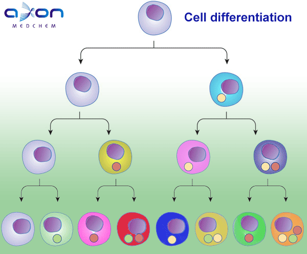 Axon Ligands™ for Cell differentiation